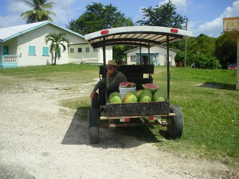 Mieszkaniec Belize- Amisz